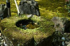 Japanse Tuin Clingendael 2014-02256 (Arie van Tilborg) Tags: japanesegarden denhaag thehague clingendael japansetuin clingendaelestate landgoedclingendael