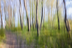Panning (AemmeDesign) Tags: color green foglie landscape nikon panning albero paesaggi foresta griffo greatphotographers aemmedesign potd:country=it