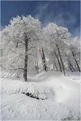 Lindux 0003 (Ezcurdia) Tags: snow miguel de nieve nevada icy hielo pamplona aralar urbasa ibaeta san frozentrees artesiana lindux nieve aralar lanzurda pamplona