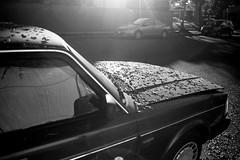 Leaf Blanket (bhop) Tags: california morning blackandwhite bw film leaves car volvo los nikon angeles automotive filmcamera nikkor ilford fp4 f4 160 3570mm f4s iso160 f28d