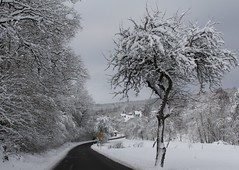 The old, old appletree (:Linda:) Tags: road snow tree germany village curvy thuringia brden