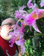 MoBot Orchid 2015-062 (wooferSTL) Tags: orchid orchids botanicalgarden orchidshow mobot