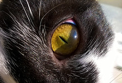 pet macro green eye nature animal yellow cat nokia 630 lumia