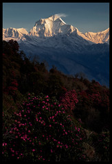 Sunrise on Poon Hill (doug k of sky) Tags: nepal doug hill poon himalaya annapurna dhaulagiri i mountainscapes kofsky