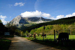 _DSC2202 (adrizufe) Tags: horses green nature landscape ilovenature nikon ngc bizkaia basquecountry springtime lovelyday atxondo durangaldea nikonstunninggallery aplusphoto d7000 adrizufe adrianzubia