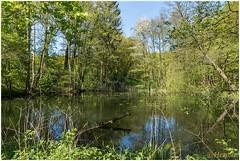Molenvijver (HP010865) (Hetwie) Tags: nature nederland natuur limburg vijver natuurmonumenten stjansberg plasmolen molenvijver bovensteplasmolen kiekebergroute