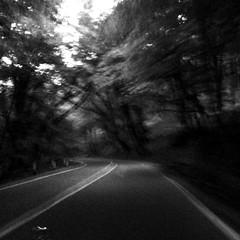 Be on your way. (mariamkhutsishvili33) Tags: wood trees way georgia blackwhite outdoor oasis kakheti squarephotography instagram