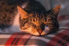 Hace fro. (Leonel Gallard) Tags: autumn winter cats pets cold cute love argentina canon photography eos photographer 365 fotgrafo leonel argentino argentinean gallard 60d eos60d