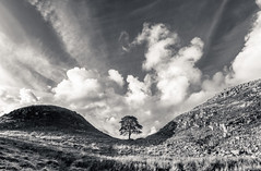 Alone in the shadows (grbush) Tags: sky mountain tree wall clouds landscape lumix worldheritagesite hills panasonic northumberland sycamore g3 nationaltrust lonetree hadrians robinhoodprinceofthieves sycamoregap lumixg olympusm918mm