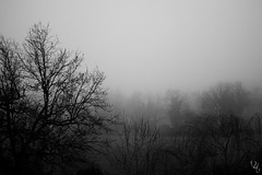 Fog I (VikingAle) Tags: blackandwhite bw mist fog casa creepy spooky nebbia febbraio foggyday 2016 depressiveblackmetal bwlover