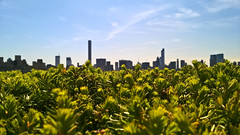 Skyline (nyazilla79) Tags: newyork rooftop met metropolitanmuseumofart nwc