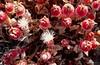 Ice berries (Anika Malone) Tags: ocean beach pacific malibu leocarrillostatebeach