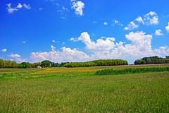 Wonder Meadow (misi212) Tags: wonder meadow