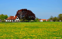 Dutch Landscape Flowers (JaapCom) Tags: flowers trees dutch farmhouse landscape holanda landschaft paysbas dandelions paardebloemen wezep jaapcom