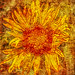 Floral Solar Flare