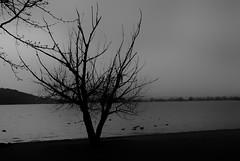 winter 2 (mr Cj photo) Tags: trees bw monochrome landscape flora canberra ghostly d80 nikond80 ozimages aussieimages