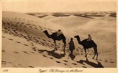 Egypt, The Passage in the Desert, 1920's (Steven Czitronyi) Tags: desert postcard camels