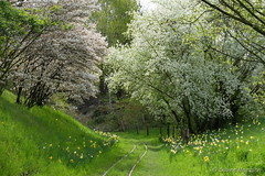 Paradiesischer Britzer Garten (Sockenhummel) Tags: park garden spring fuji tulips finepix fujifilm bume garten x30 frhling tulpen buga britzergarten tulipane grnberlin fujix30