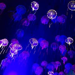 jellyfish (kristalT) Tags: blue jellyfish glow purple