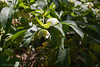 CRW_8347 (kisugi802) Tags: eosd60 2016 長居植物園 20160521