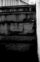 (birthplace) (Dinasty_Oomae) Tags: blackandwhite bw plant monochrome blackwhite kodak outdoor steps chiba  retinette funabashi