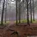 brouillard en forêt