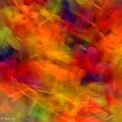 DSC_3980_v1 (rypl26) Tags: france pastel aquarelle popart abstraction flowerpower fra psychdlique