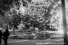 Palermo (Lord Seth) Tags: bw italy aquarium nikon candid streetphotography palermo sicilia biancoenero 2015 giardinobotanico d5000 lordseth