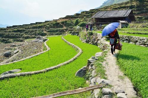 sapa - vietnam 32