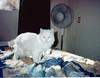 Delilah and Fan (kevin63) Tags: cats photoshop photos myrtle delilah lightner lingling briars