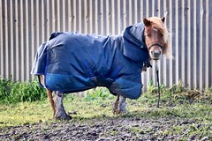 366/176: Brrrrr (ademanser) Tags: winter horse