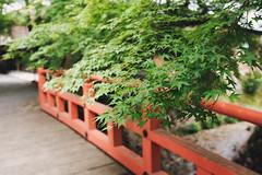 DSCF0415.jpg (is98wayi) Tags: kyoto japan travel ohara maple