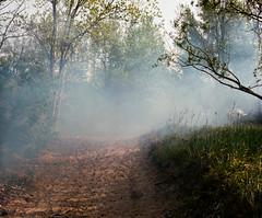 (joelbrendenphotography) Tags: morning beach zeiss mediumformat fire buffalo kodak smoke hamburg hasselblad 28 500 portra wildfire woodlawn planar wny lackawana 160 80mm 500cm portra160