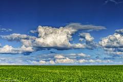 DSC02377.jpg (J.Weyerhuser) Tags: felder wolken hechtsheim