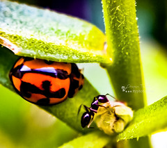 macro natgeo macrotastic macrospotlight macrocaptures... (Photo: Myphotorose-on and off.. :) on Flickr)