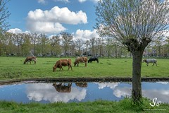 (Shirshendu Sengupta) Tags: holland netherlands dutch garden japanese spring den hague haag clingendael