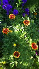 94 (jurinkof) Tags: fleurs blten   kvety kvty