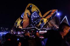 Lighting the Sails (Leighton Wallis) Tags: turtle sony sydney vivid australia circularquay 55mm nsw newsouthwales alpha f18 aboriginalart sydneyoperahouse 2016 mirrorless a7r vividsydney emount ilce7r vivid2016