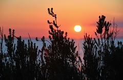 The sun will set for you (Nicky@Photography) Tags: france nature silhouette soleil eau ciel contrejour ocan leder charentemaritime soleilcouchant saintmartinder