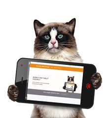 mobile-responsive-website-cat-400