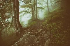 Heiligkreuz-Palfries (2016-06-04) (Toni_V) Tags: leica mist fog schweiz switzerland europe dof nebel suisse bokeh hiking 28mm ostschweiz rangefinder trail mp svizzera sentiero stgallen wanderung wanderweg randonne 2016 heidiland svizra escursione leicam elmaritm digitalrangefinder niksoftware messsucher 160604 type240 typ240 analogefexpro2 toniv m2400295 heiligkreuzpalfriesgonzensargans