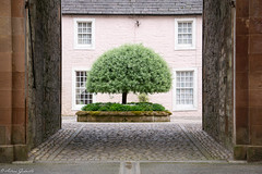 Yard (Artrs Gedvillo) Tags: tree green castle yard garden gate oldhouse manor greentree