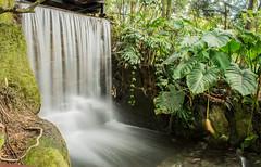 Motion blur (JONATHAN HUERTAS) Tags: naturaleza nature landscape waterfall paisaje motionblur jardinbotanico cascada