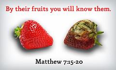 Matthew 7:15-20 (joshtinpowers) Tags: matthew bible scripture