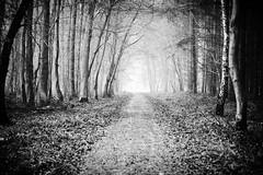 Gris Blanc (www.danbouteiller.com) Tags: france french normandie normandy forest foret arbres trees la londe monochrome monochromatic black white noir blanc bw nb blackandwhite blackwhite noiretblanc noirblanc canon canon5d 5dmk2 5d 50mm 50mm14 5d2 5dm2 eos