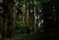 morning walk (Alvin Harp) Tags: trees green nature june forest morninglight washington sony exploring natur foliage naturelover 2016 naturesbeauty teamsony sonya7rii fe24240mm sonyilce7rm2