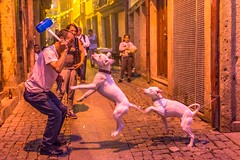 Festa Sao Joao (Kuba Abramowicz) Tags: festa sao joao festival street streets scene people dogs dog portugal porto hammer nikon nikor 35mm night light lights life event fun