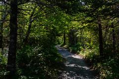 _DSC8627.jpg (newminaswilders) Tags: ca canada nature novascotia portjoli naturepaths