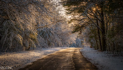 Winter Road (Vic Zigmont) Tags: winterscene capecod winter countryroad snow