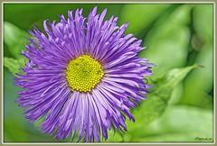 _JVA7638_DxO (mrjean.eu) Tags: park pink blue white france flower macro fleur rose yellow fleurs jaune garden rouge nikon jardin vert bleu botanic lorraine botanique parc metz 105mmf28 flowerws grteen